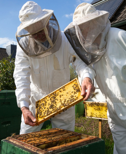 Commercial Membership 26 Hives