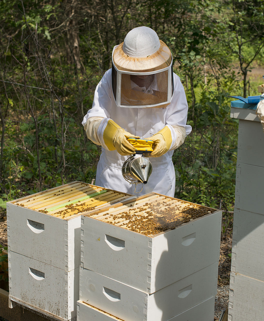 Beekeeper Sector Memberships